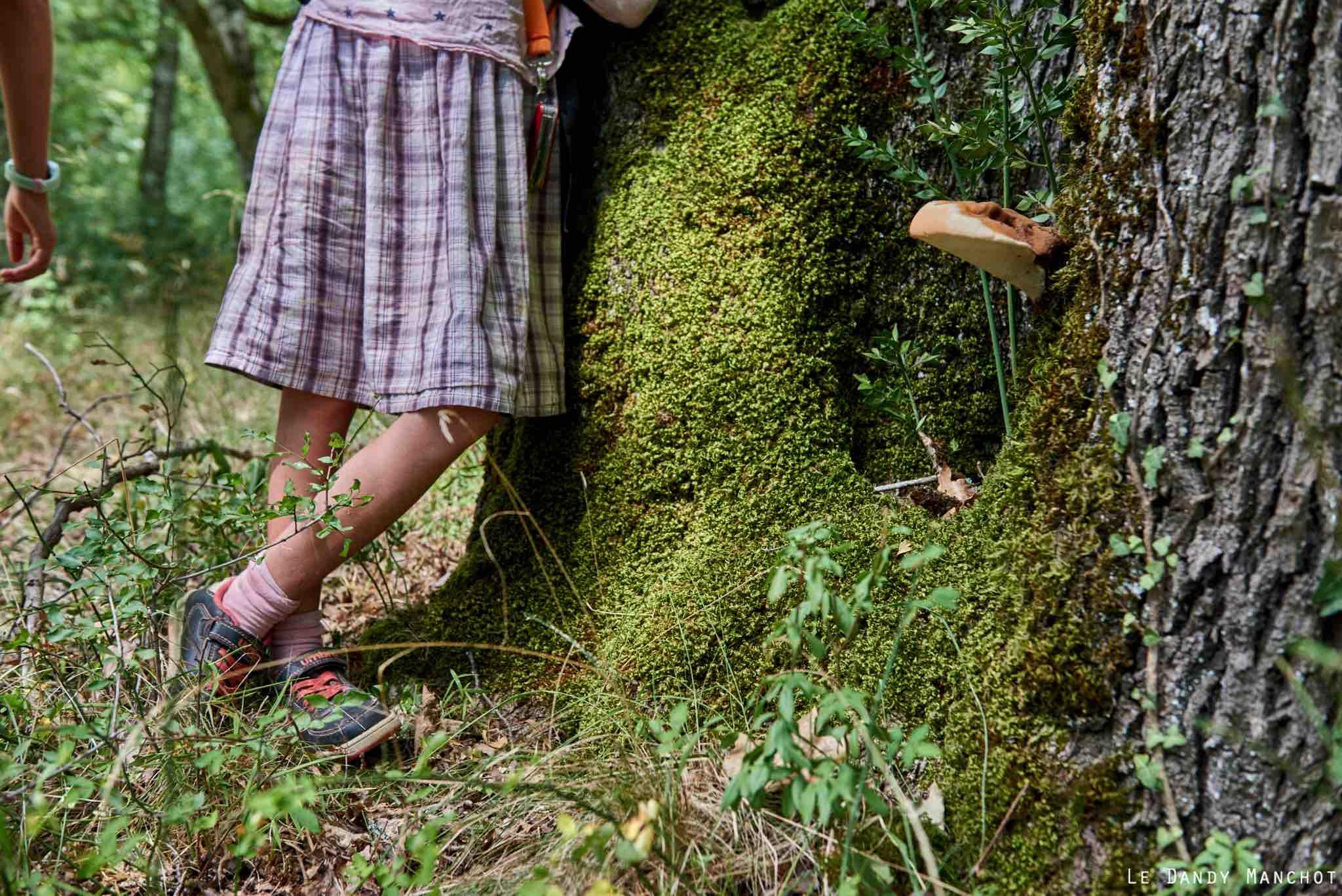 Atelier Promenade en forêt de Grésigne - Fredéric Boyer, Paysan des Couleurs. Le dimanche  05 août 2018. 33è édition du Festival l'Été de Vaour.